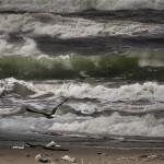 09 Morze